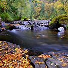 Lake Creek Fall by Charles &amp; Patricia   Harkins ~ Picture Oregon