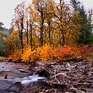 Canyon Creek Fall by Charles &amp; Patricia   Harkins ~ Picture Oregon