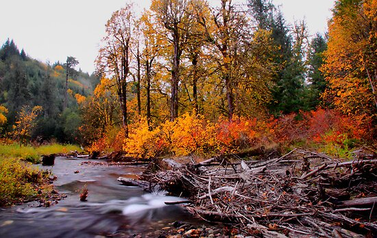 Canyon Creek Fall by Charles & Patricia   Harkins ~ Picture Oregon