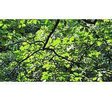 Summer Leaves Photographic Print