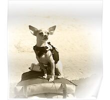Chihuahua and the Kayak Adventure Poster