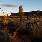 Early Light on Uluru by Cathy  Walker
