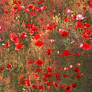 Poppies on the Verge by Linda Lees