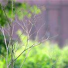 Shades of Green by Shiju Sugunan