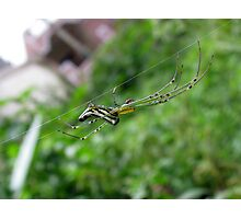 Silver Orb Spider Photographic Print