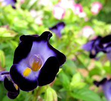 Wishbone flower by Shiju Sugunan