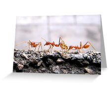 Weaver Ants Greeting Card