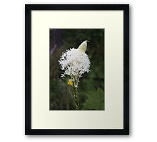 Indian Basket Grass Framed Print