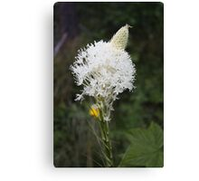 Indian Basket Grass Canvas Print
