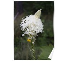 Indian Basket Grass Poster