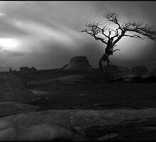 Dog Rocks - Australia by Petal O'Dell