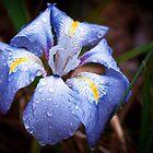 Velvet Blue by Ryan Cawse