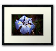 Velvet Blue Framed Print