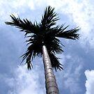 Betelnut tree by Shiju Sugunan