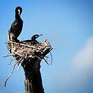 Bird's Nest by Shiju Sugunan
