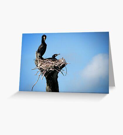 Bird's Nest Greeting Card