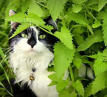 Catnip Garden by katevernaphoto