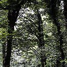 Forest Trail by Darren Allen