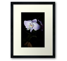 Solo Orchid Framed Print