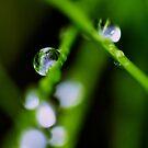 Summer tears by LadyFi