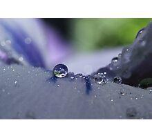 Crystal Pansy Photographic Print