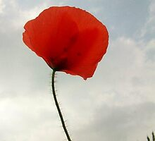 Coquelicot... by karina73020