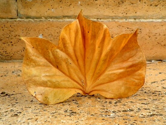 Golden Leaf  by ©The Creative  Minds
