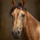 Portrait of a Stallion by Leslie Nicole