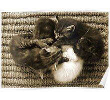 Kitten Furball Poster