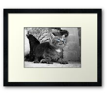 Kitten 'Ol Blue Eyes' Framed Print