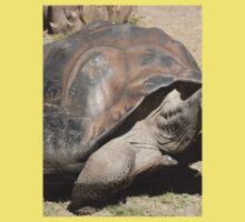 Furry Galapagos Tortoise