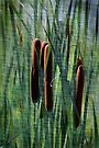 Cattails by Eileen McVey