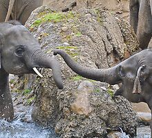 Baby Elephants by bullardm2001