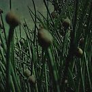 a grungy chive… by dabadac
