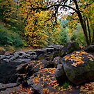 Lake Creek Fall Colors by Charles &amp; Patricia   Harkins ~ Picture Oregon