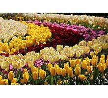 Keukenhof Gardens Tulips Photographic Print
