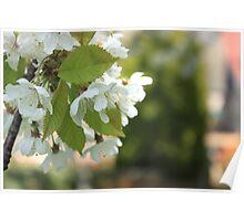 Blossom closeup Poster