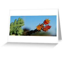 Succulent In Bloom Greeting Card