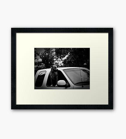 Plaza Dog Framed Print