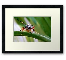 Wasps Are Our Friends Framed Print