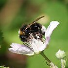 Humble Bumble Bee by LorrieBee