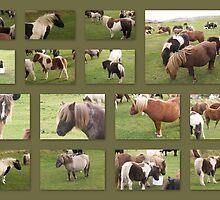 Shetland Pony Collage by Sherri Fink