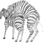 Zebra Love by Adair Imrie
