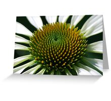 White Cone flower  Greeting Card