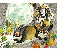 Moonlight With Jackalopes Photographic Print