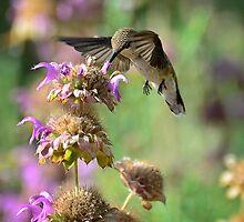 The Beauty of Nature by Saija  Lehtonen