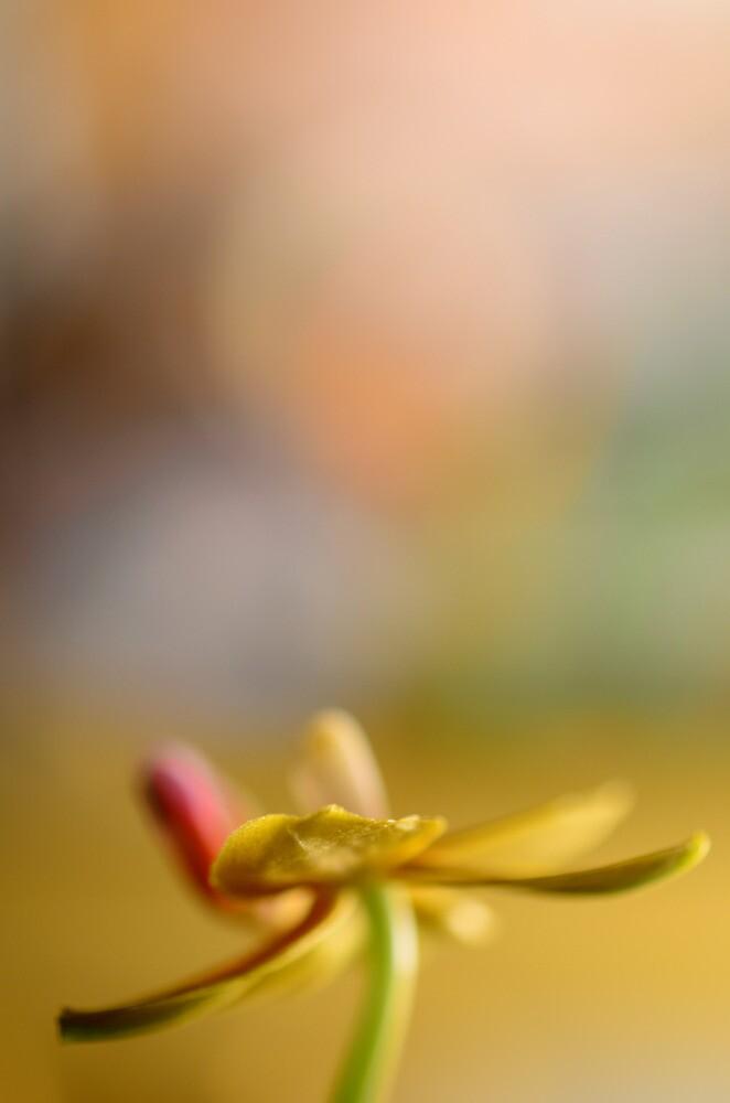 She Rejoiced During Sun Salutation! by Ainsley Kellar Creations