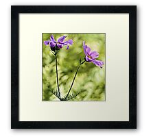 Pink Cosmos - Among The Wood Fern Framed Print