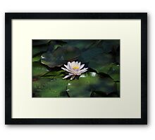 Water Lily - Kenilworth Aquatic Gardens Framed Print