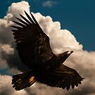 The Baby Eagle Soars by David Friederich